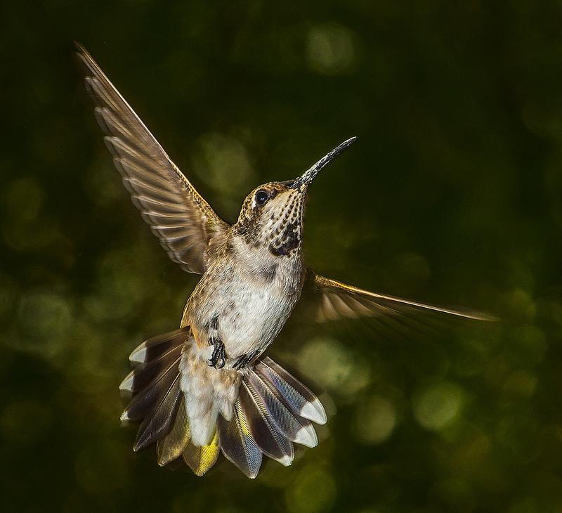 oiseau en vol - astuce photo