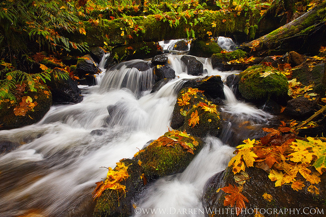 Autumn Cascade by Darren White