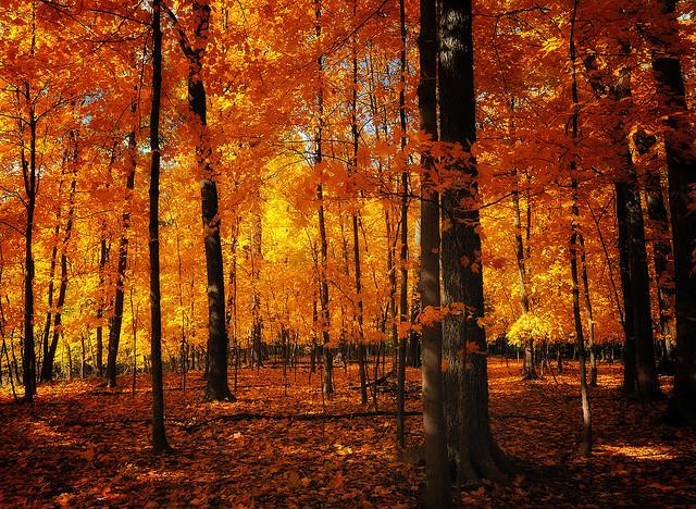 Comment photographier l 39 automne et ses couleurs - L automne et ses couleurs ...