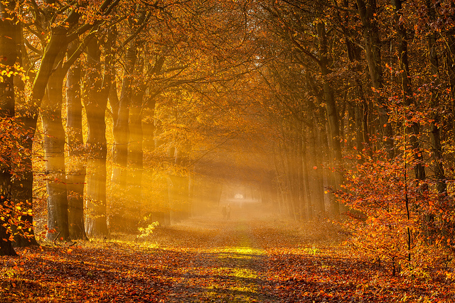 Golden rays of Autumn by Ron Buist