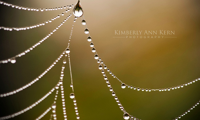 Hanging by a web by Kimberly
