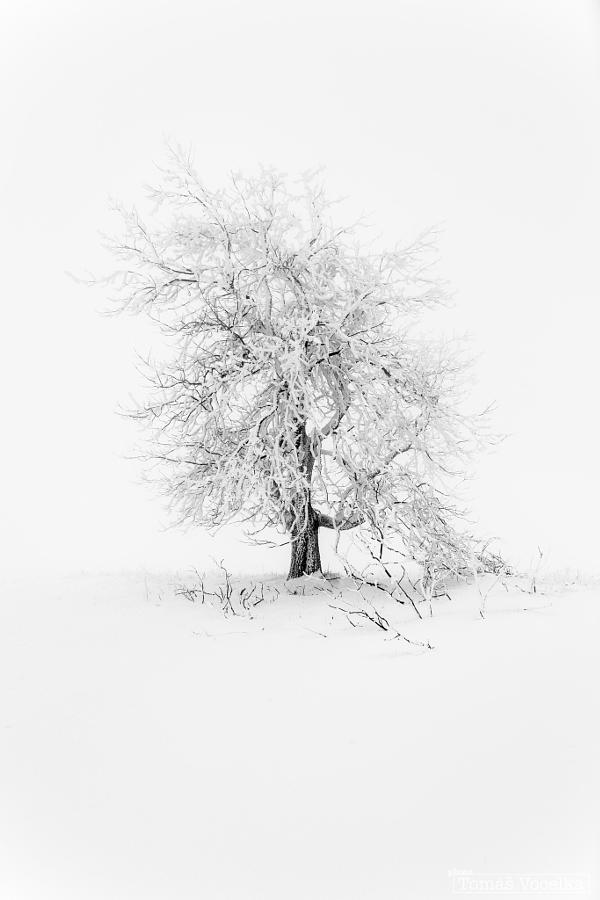image-en-noir-et-blanc-neige-paysage-tomas-vocelka